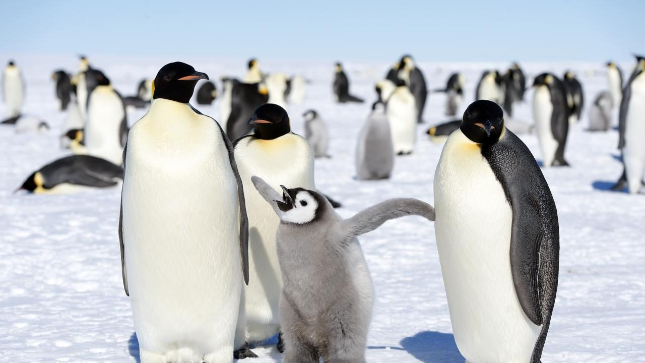 March of the Penguins: 3 Rituals to Enrich Your Client Relationships