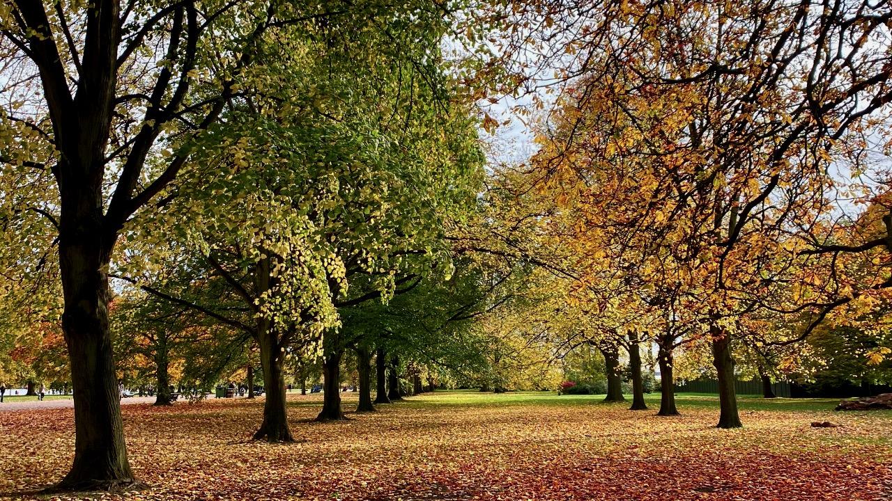 Featured Image Autumn Update